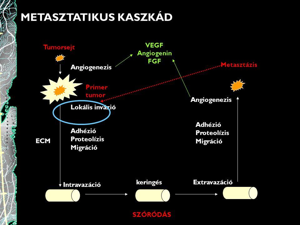 METASZTATIKUS KASZKÁD