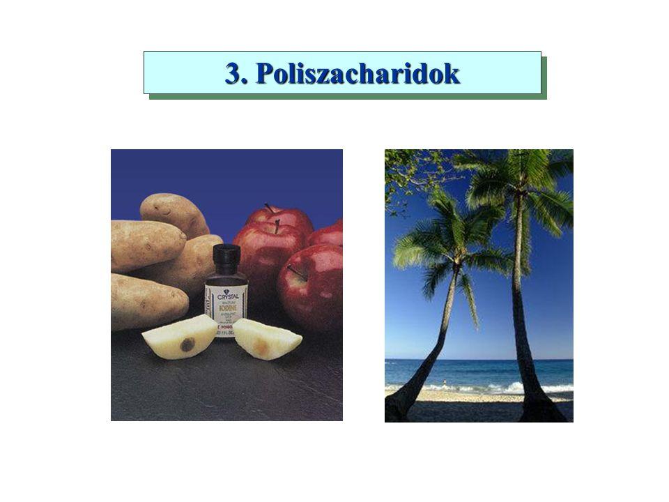 3. Poliszacharidok