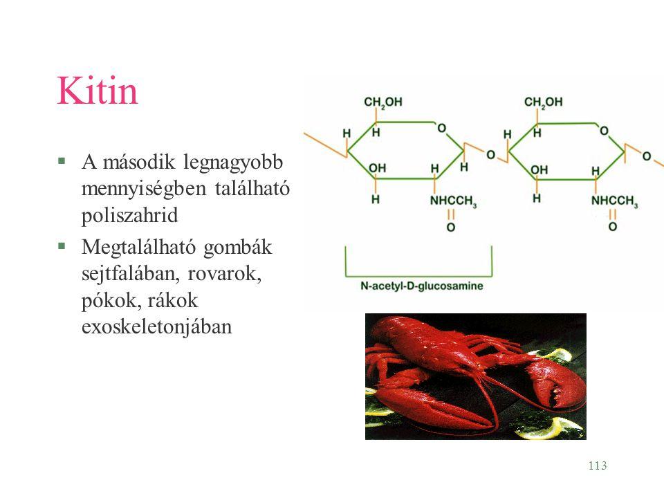 Kitin A második legnagyobb mennyiségben található poliszahrid