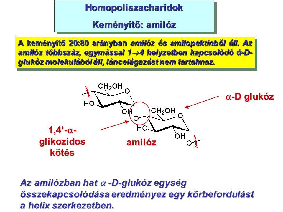 Homopoliszacharidok Keményítő: amilóz -D glukóz