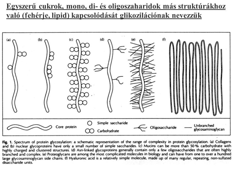 Egyszerű cukrok, mono, di- és oligoszaharidok más struktúrákhoz