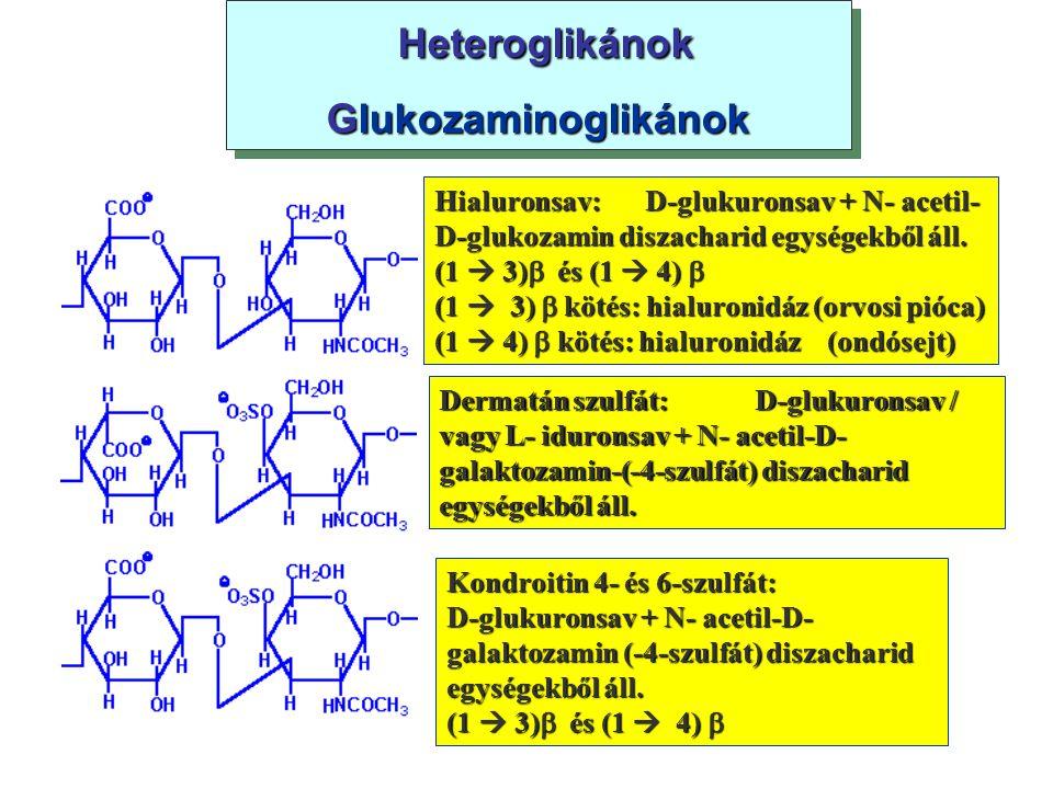 Heteroglikánok Glukozaminoglikánok