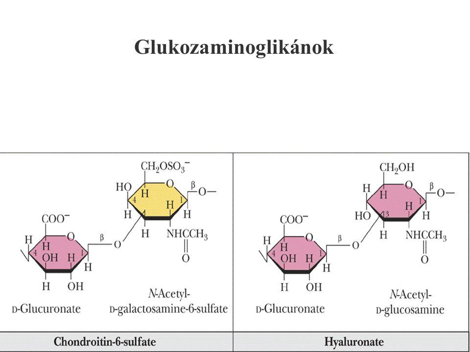 Glukozaminoglikánok