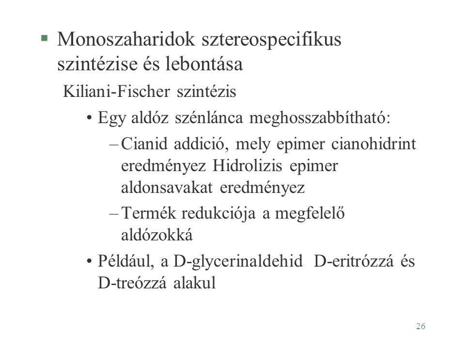 Monoszaharidok sztereospecifikus szintézise és lebontása