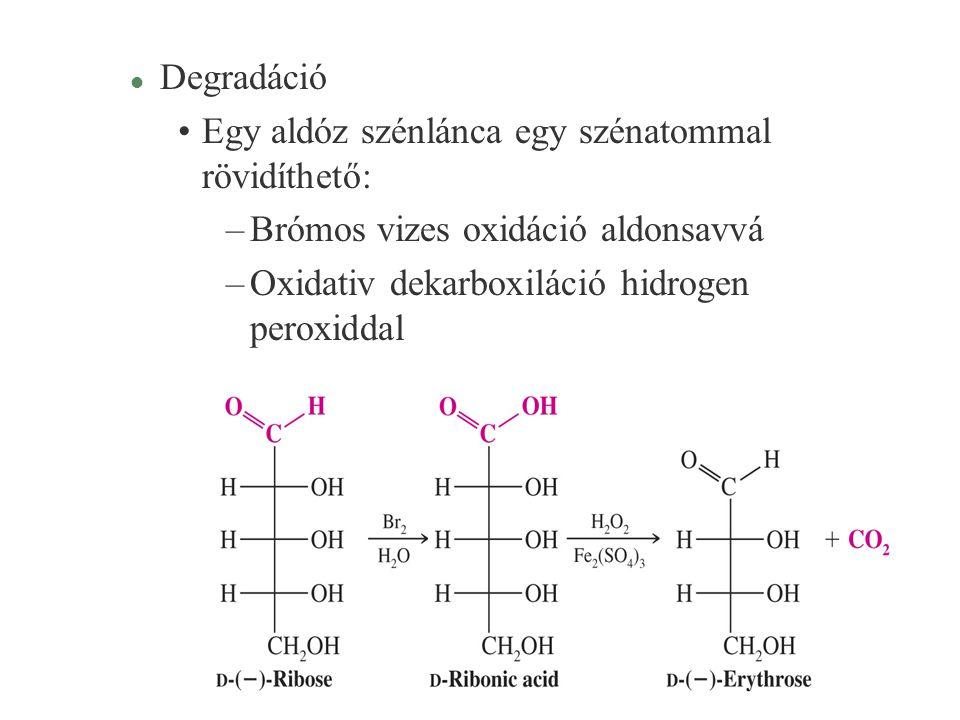 Degradáció Egy aldóz szénlánca egy szénatommal rövidíthető: Brómos vizes oxidáció aldonsavvá.