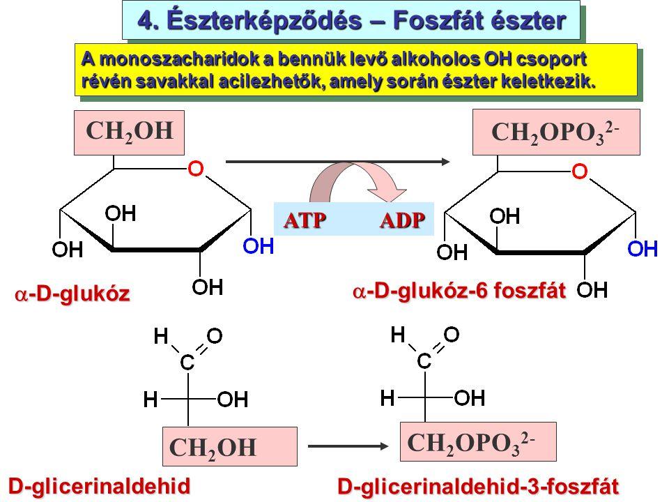 4. Észterképződés – Foszfát észter D-glicerinaldehid-3-foszfát