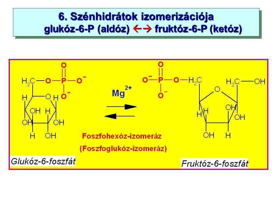 6. Szénhidrátok izomerizációja