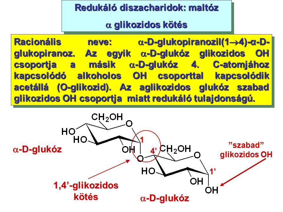Redukáló diszacharidok: maltóz szabad glikozidos OH