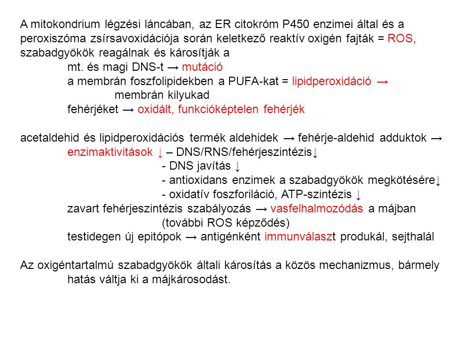 A mitokondrium légzési láncában, az ER citokróm P450 enzimei által és a peroxiszóma zsírsavoxidációja során keletkező reaktív oxigén fajták = ROS, szabadgyökök reagálnak és károsítják a mt. és magi DNS-t → mutáció a membrán foszfolipidekben a PUFA-kat = lipidperoxidáció → membrán kilyukad fehérjéket → oxidált, funkcióképtelen fehérjék