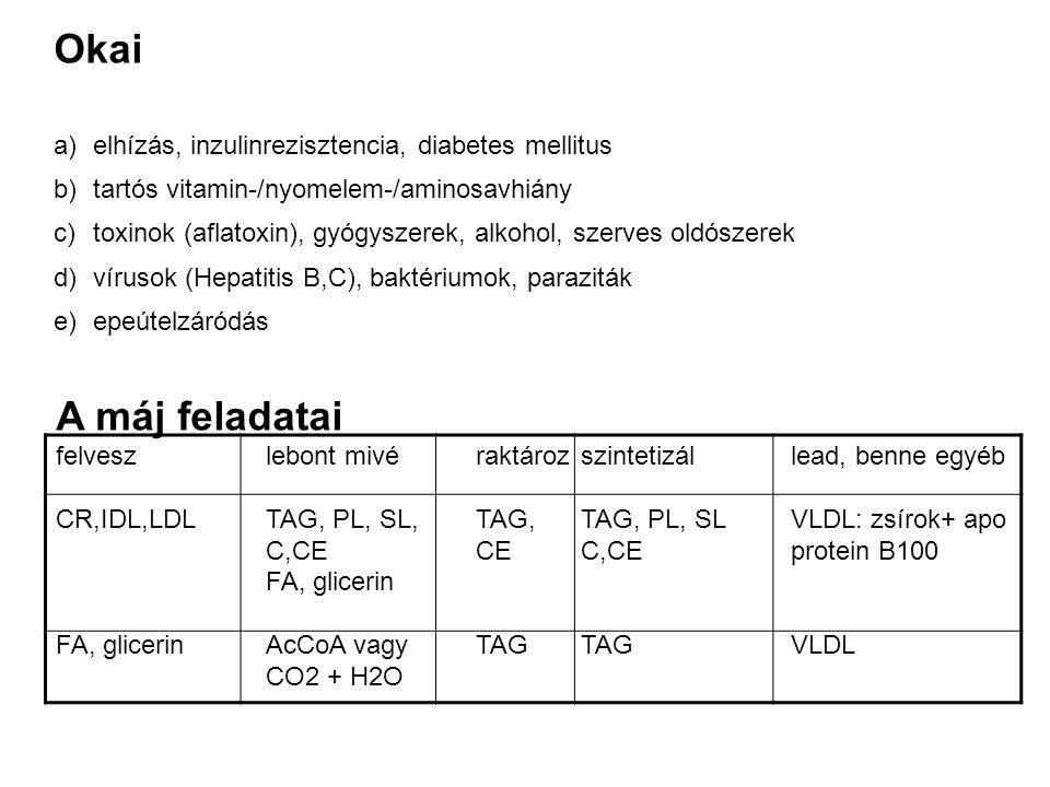 Okai A máj feladatai elhízás, inzulinrezisztencia, diabetes mellitus