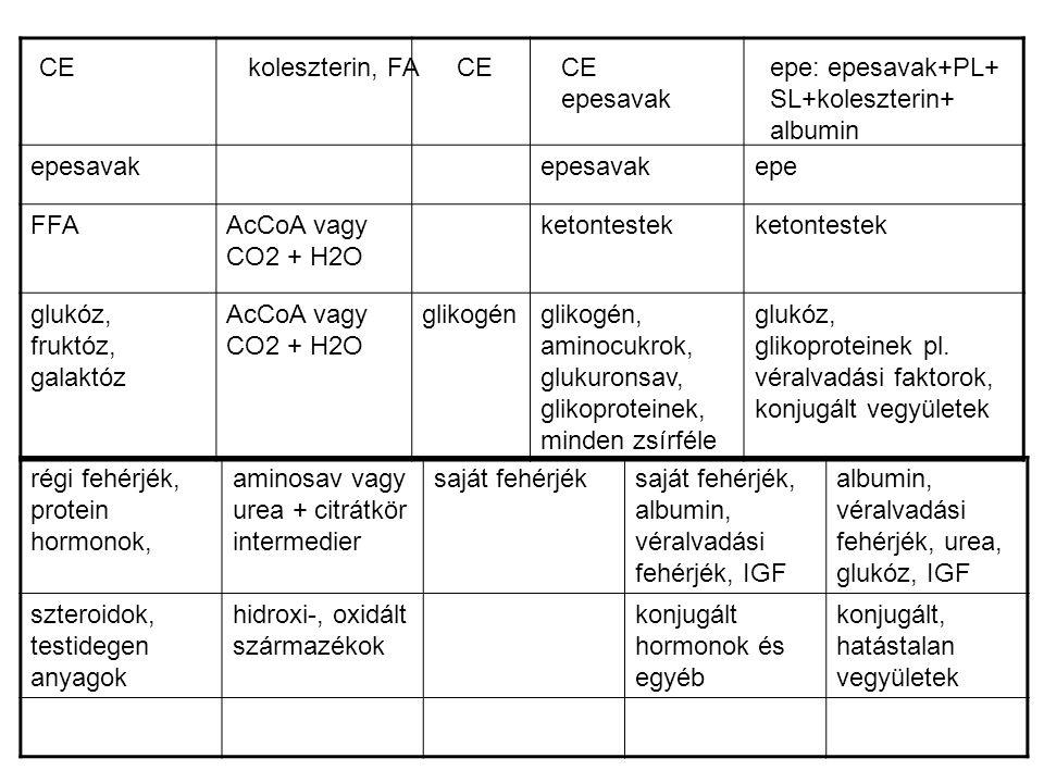 epesavak epe. FFA. AcCoA vagy CO2 + H2O. ketontestek. glukóz, fruktóz, galaktóz. glikogén.