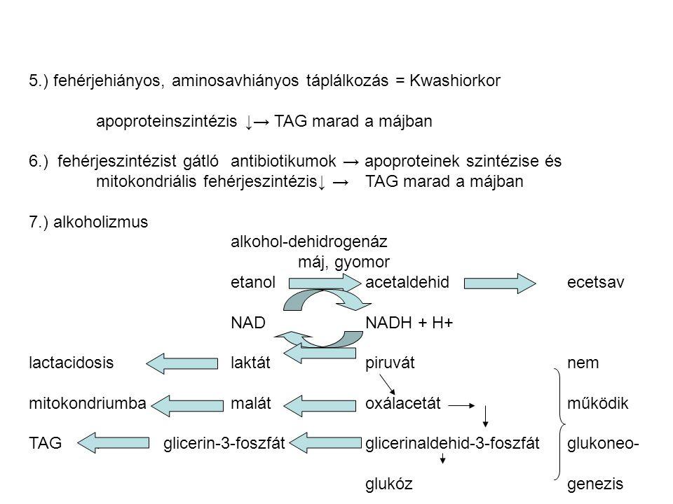 5.) fehérjehiányos, aminosavhiányos táplálkozás = Kwashiorkor