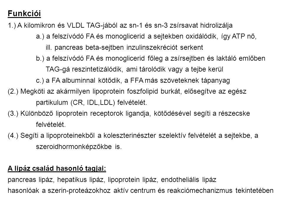 Funkciói 1.) A kilomikron és VLDL TAG-jából az sn-1 és sn-3 zsírsavat hidrolizálja.