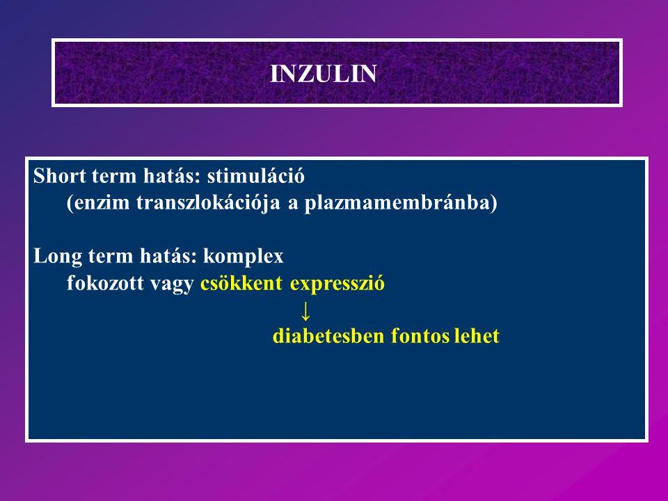 INZULIN Short term hatás: stimuláció