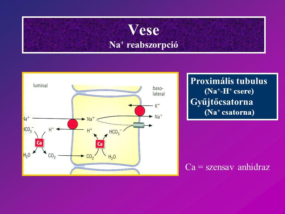 Vese Na+ reabszorpció Proximális tubulus Gyűjtőcsatorna
