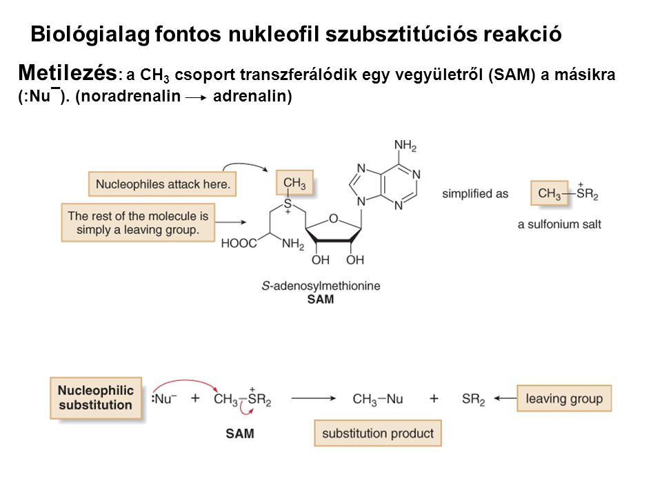 Biológialag fontos nukleofil szubsztitúciós reakció
