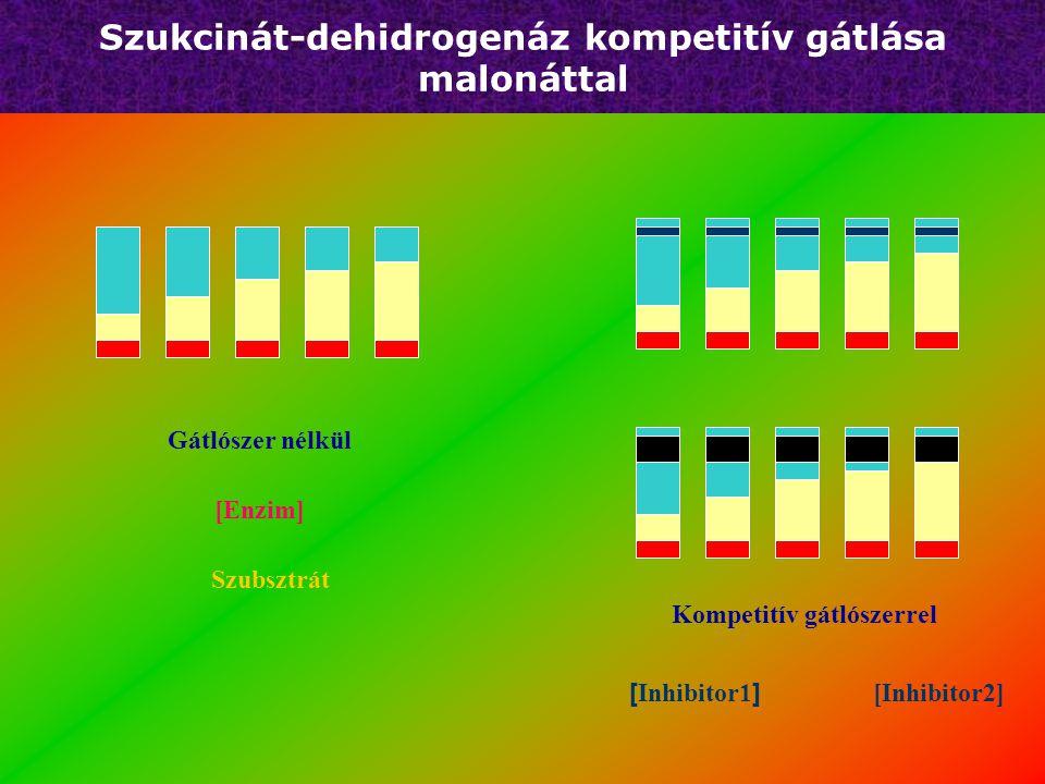 Szukcinát-dehidrogenáz kompetitív gátlása malonáttal