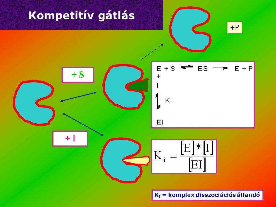 Kompetitív gátlás +P + S + I Ki = komplex disszociációs állandó