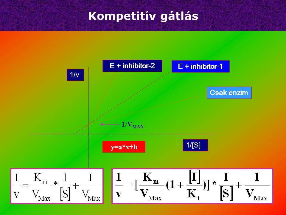 Kompetitív gátlás E + inhibitor-2 E + inhibitor-1 1/v Csak enzim