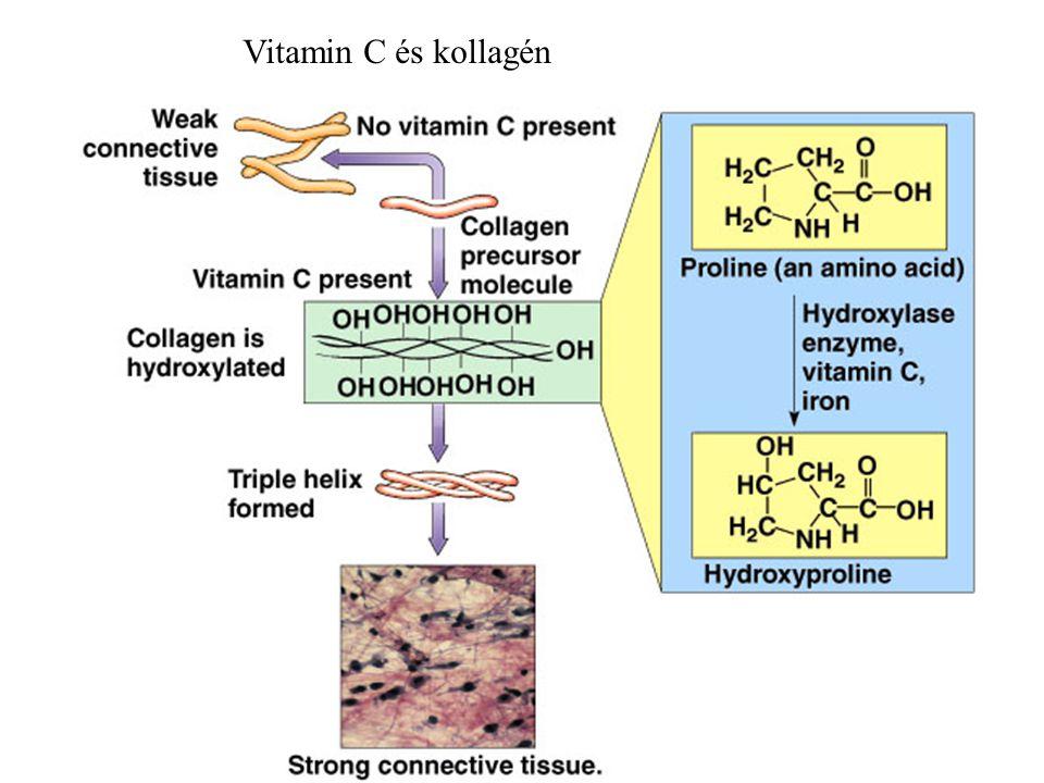 Vitamin C és kollagén