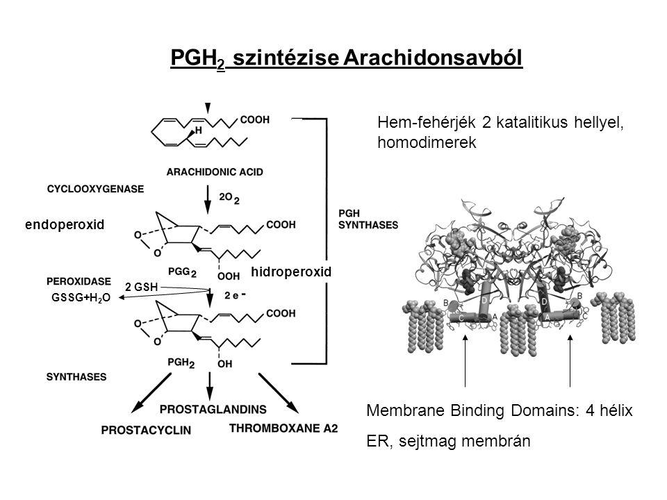 PGH2 szintézise Arachidonsavból