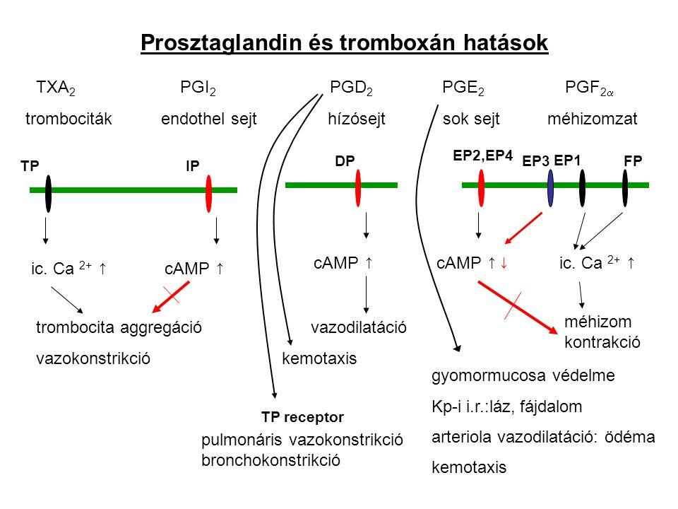Prosztaglandin és tromboxán hatások
