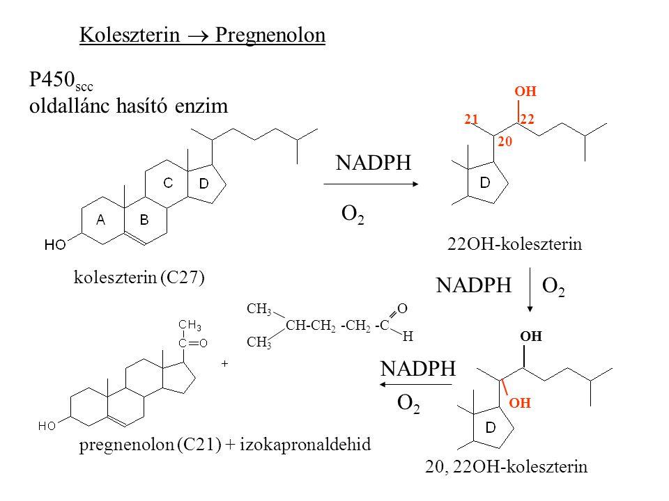 Koleszterin  Pregnenolon