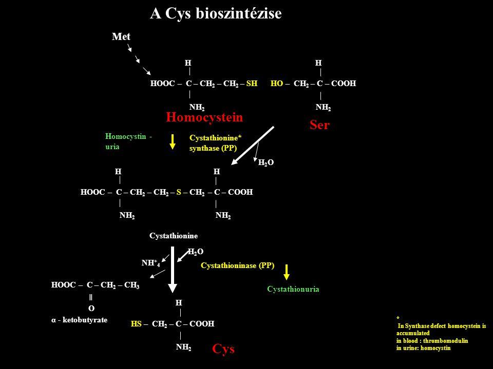A Cys bioszintézise Homocystein Ser Met H H HOOC – C – CH2 – CH2 – SH