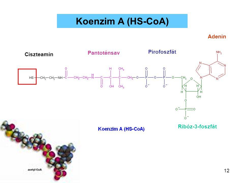 Koenzim A (HS-CoA) Adenin Pirofoszfát Pantoténsav Ciszteamin