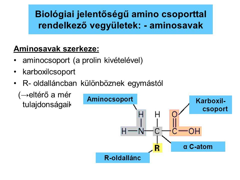 Biológiai jelentőségű amino csoporttal rendelkező vegyületek: - aminosavak