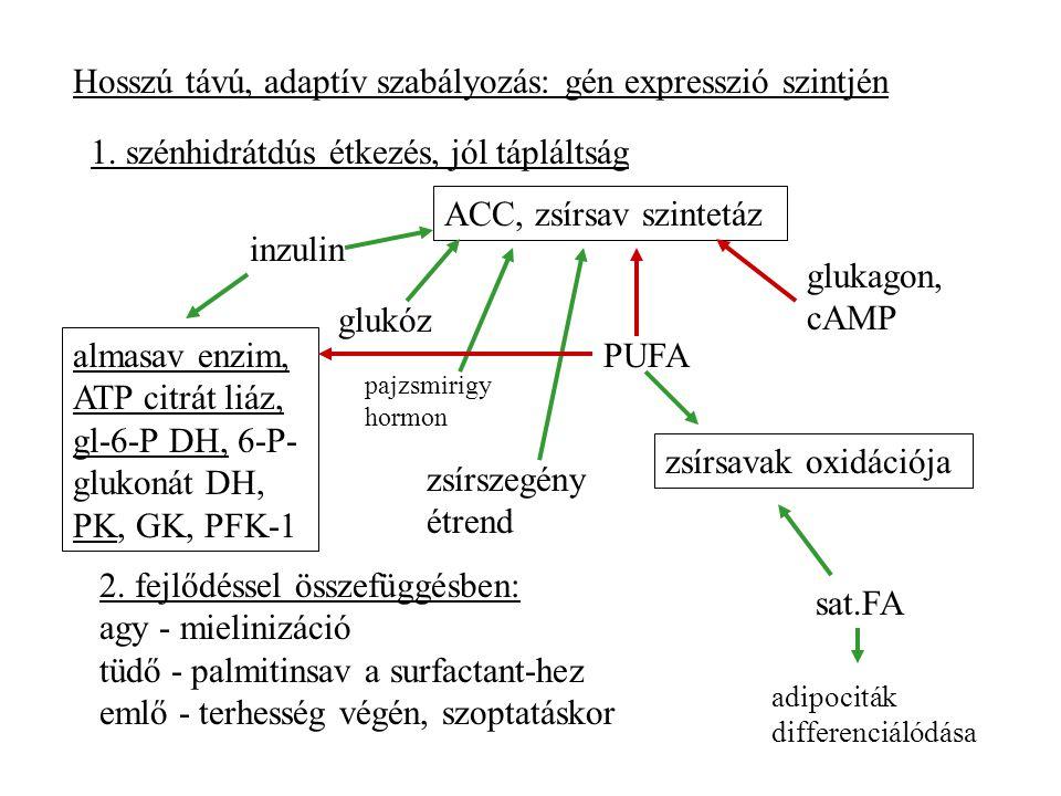 Hosszú távú, adaptív szabályozás: gén expresszió szintjén