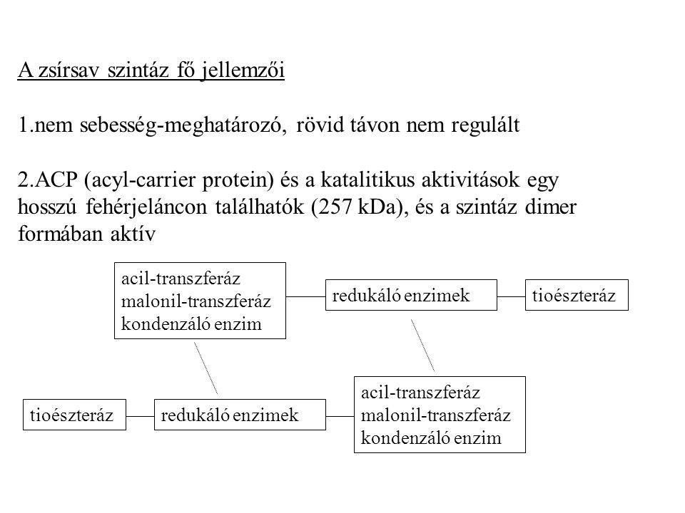 A zsírsav szintáz fő jellemzői