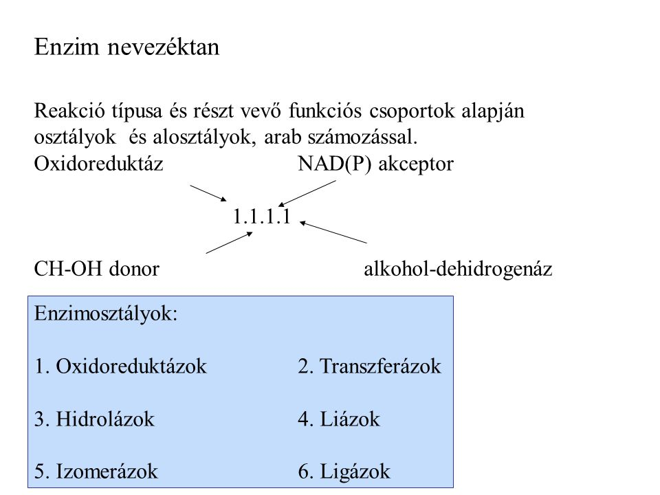 Enzim nevezéktan Reakció típusa és részt vevő funkciós csoportok alapján osztályok és alosztályok, arab számozással.
