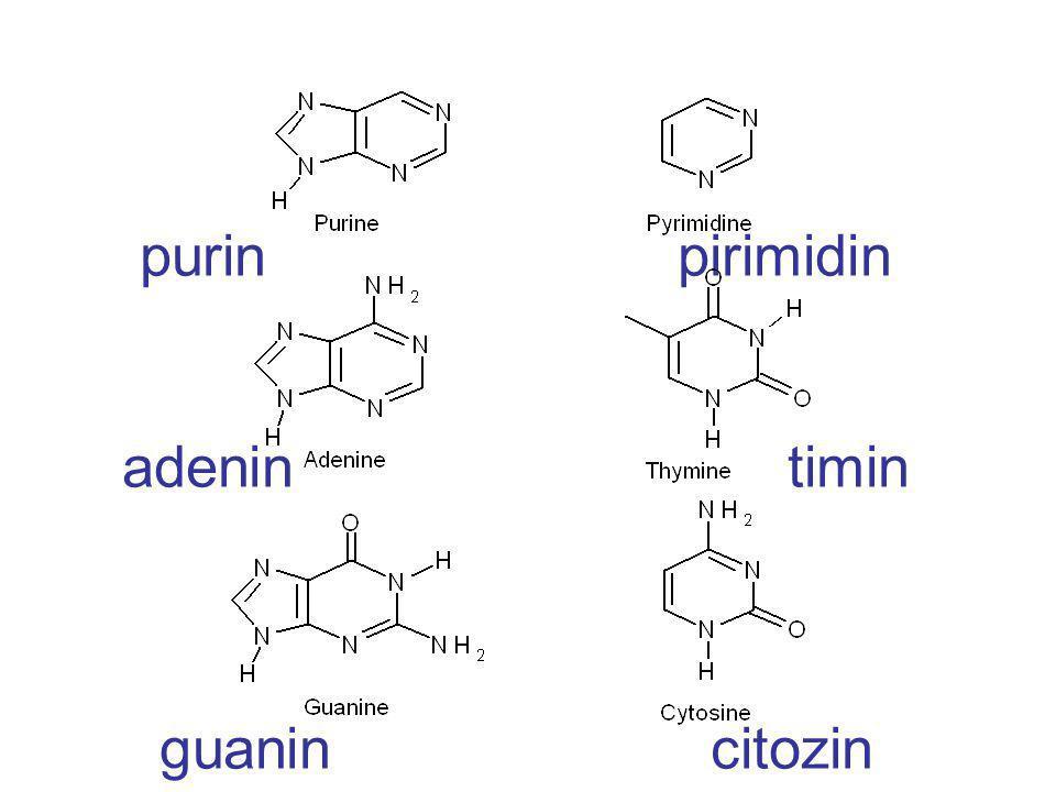 purin pirimidin adenin timin guanin citozin