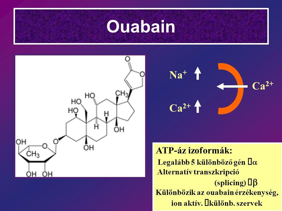 Ouabain Na+ Ca2+ Ca2+ ATP-áz izoformák: Legalább 5 különböző gén àa