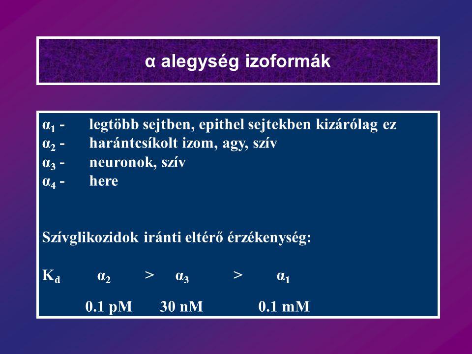 α alegység izoformák α1 - legtöbb sejtben, epithel sejtekben kizárólag ez. α2 - harántcsíkolt izom, agy, szív.