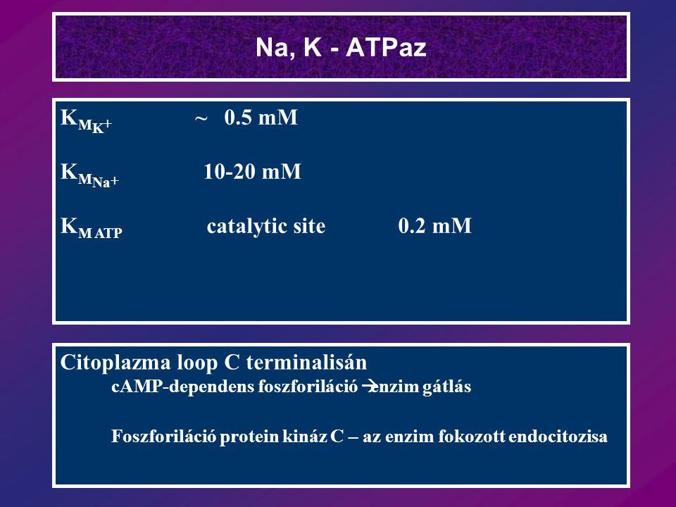 Na, K - ATPaz KMK+ ~ 0.5 mM KMNa+ 10-20 mM