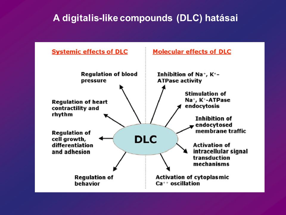 A digitalis-like compounds (DLC) hatásai