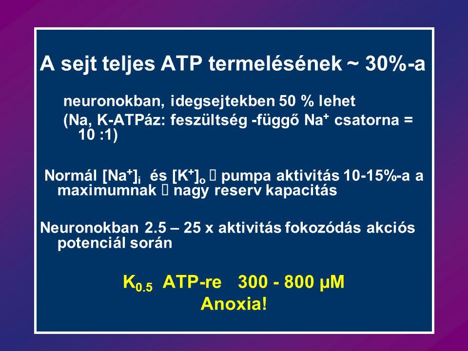 A sejt teljes ATP termelésének ~ 30%-a