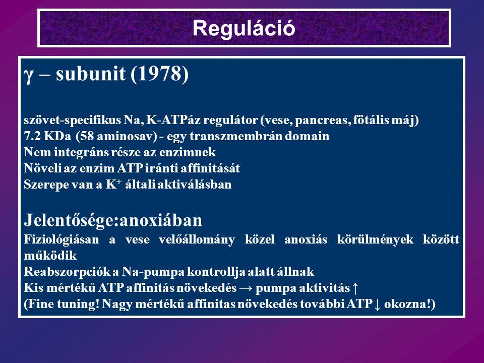 Reguláció γ – subunit (1978) Jelentősége:anoxiában