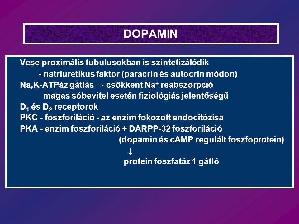 DOPAMIN Vese proximális tubulusokban is szintetizálódik