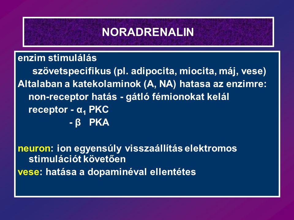 NORADRENALIN enzim stimulálás