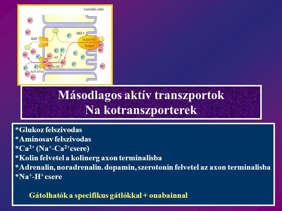 Másodlagos aktív transzportok Na kotranszporterek