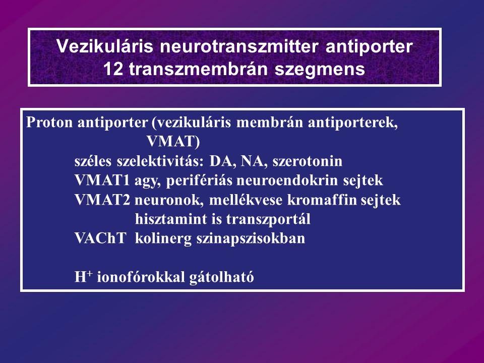 Vezikuláris neurotranszmitter antiporter 12 transzmembrán szegmens