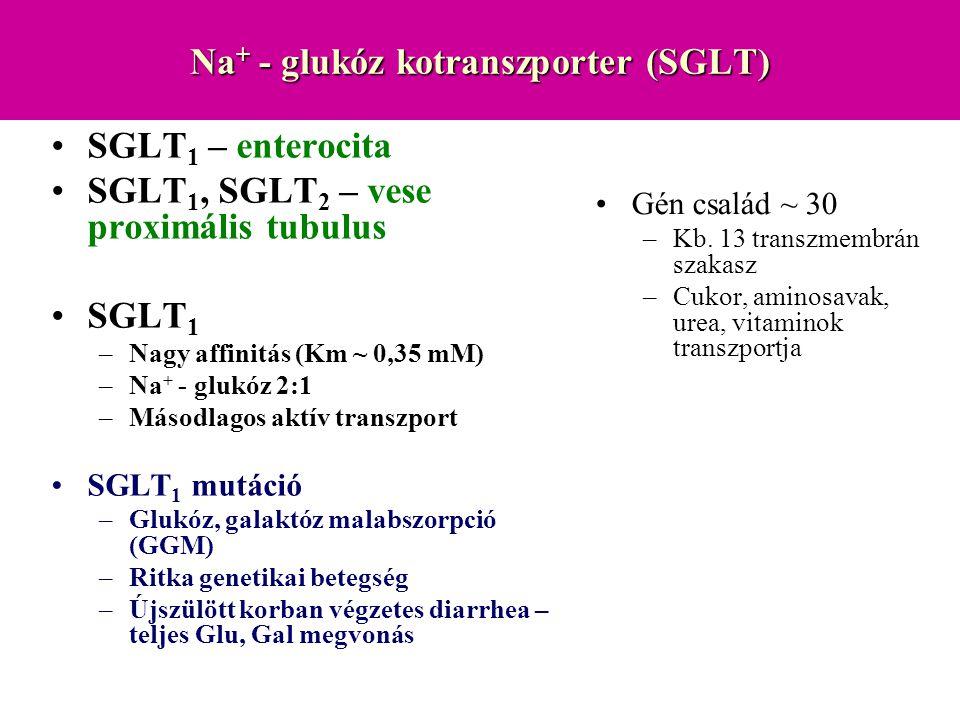 Na+ - glukóz kotranszporter (SGLT)