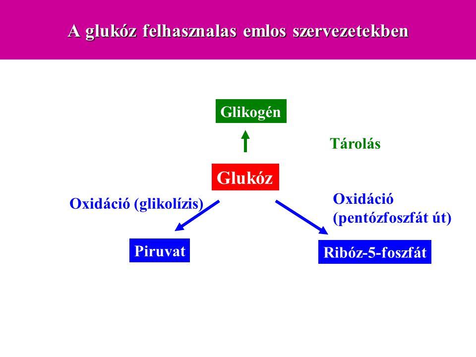 A glukóz felhasznalas emlos szervezetekben