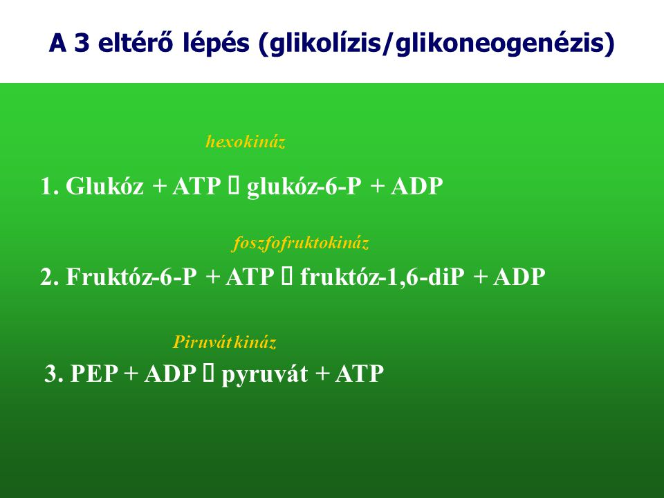 A 3 eltérő lépés (glikolízis/glikoneogenézis)