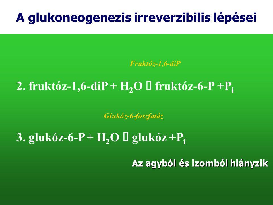 A glukoneogenezis irreverzibilis lépései