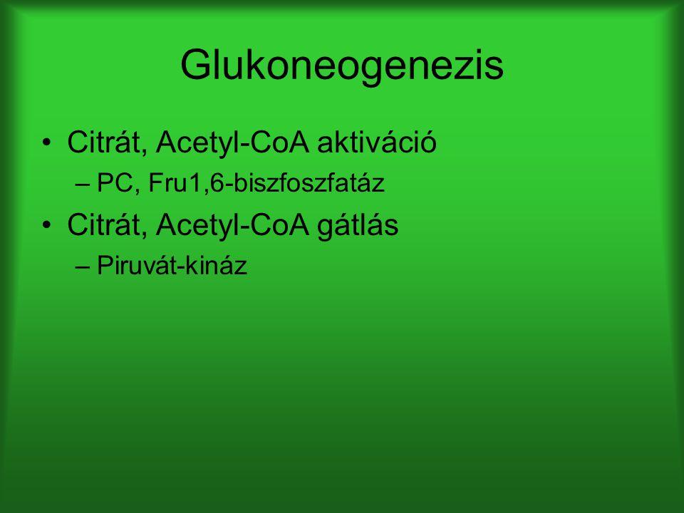 Glukoneogenezis Citrát, Acetyl-CoA aktiváció Citrát, Acetyl-CoA gátlás