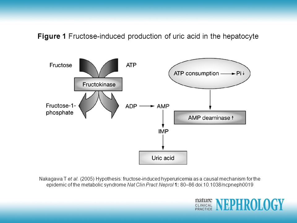 Figure 1 Fructose-induced production of uric acid in the hepatocyte